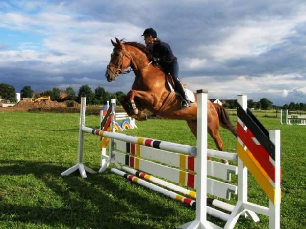 Pferdebild 4 / Turnierspringen