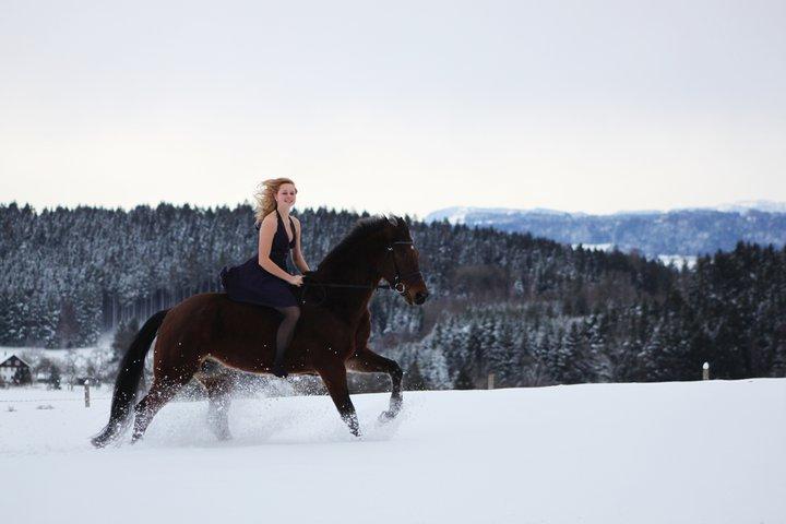 Mein Pferd im Schnee / Snow Dream