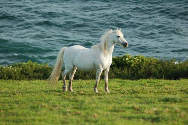 Pferdebild 2